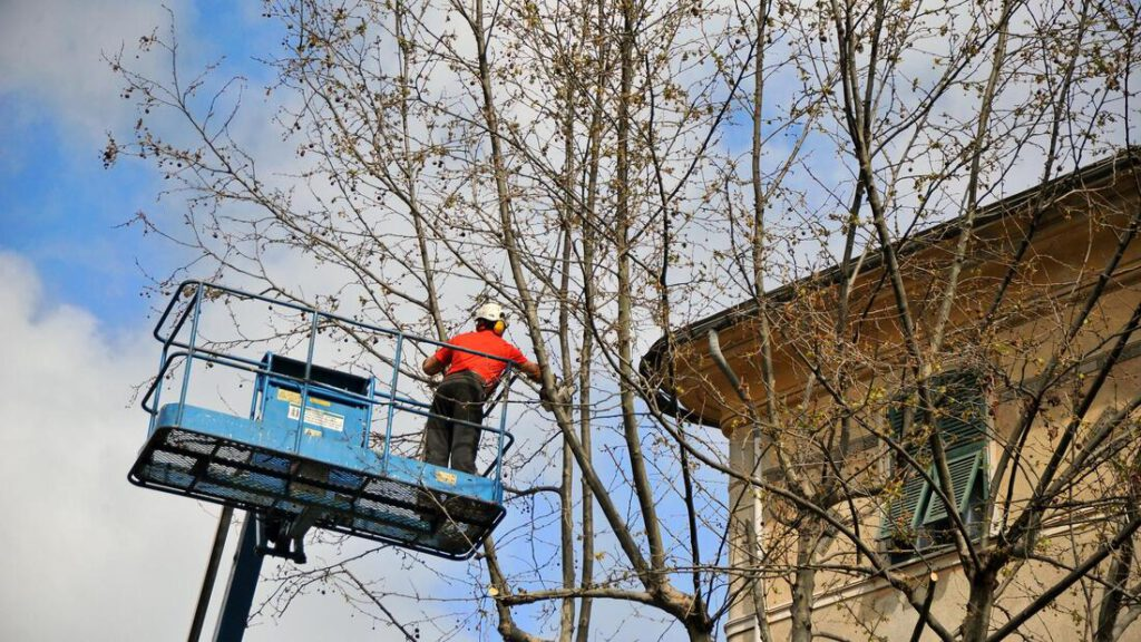 southlake-tree-service-company-storm-damage-clean-up-1_orig