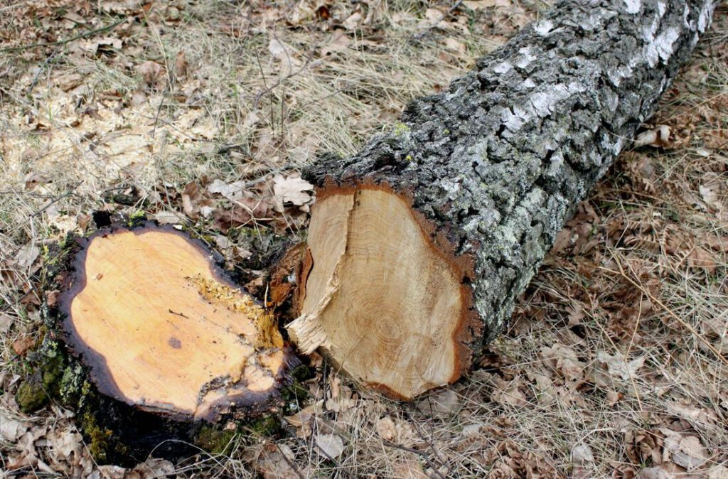southlake-tree-service-company-storm-damage-clean-up-2_orig