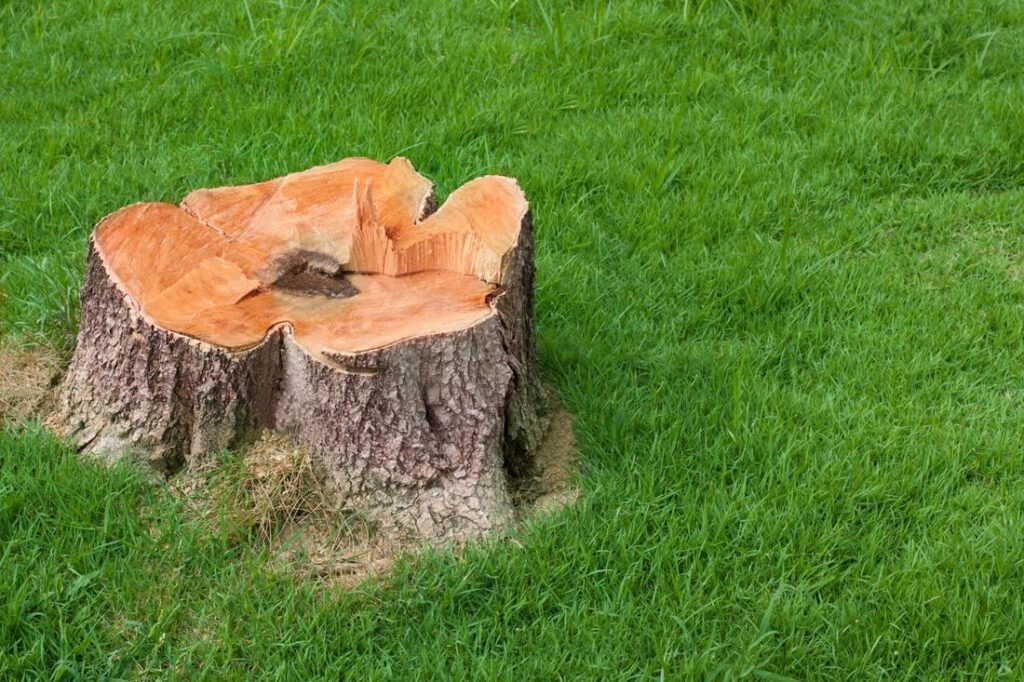 southlake-tree-service-company-stump-grinding-removal-1_orig