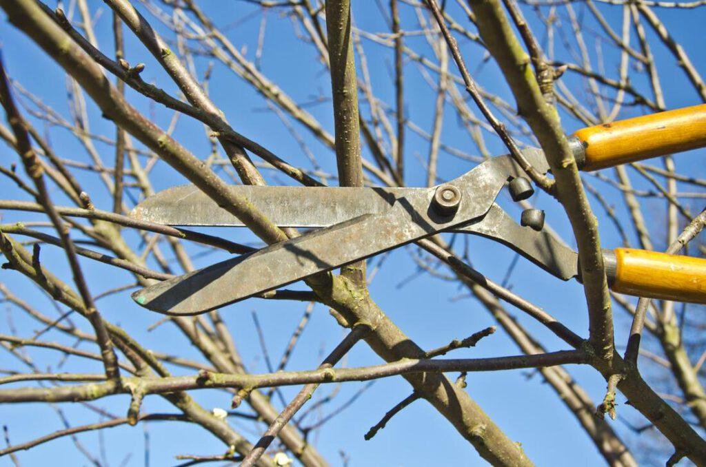 southlake-tree-service-company-tree-brush-trimming-1_orig (1)