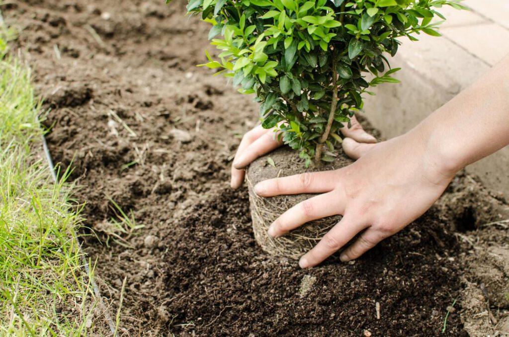 southlake-tree-service-company-tree-planting-moving-1_orig