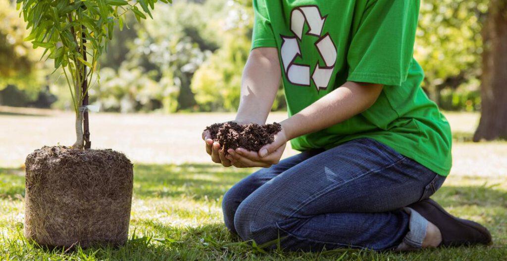southlake-tree-service-company-tree-planting-moving-2_orig