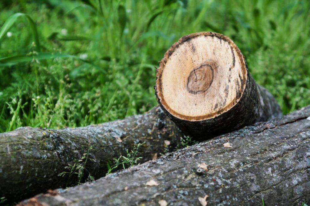 southlake-tree-service-company-tree-removal-disposal-1_orig